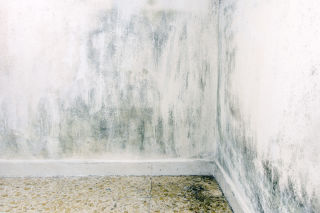 Possible Health Effects of Mould Exposure