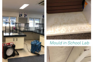Mould Remediation in School